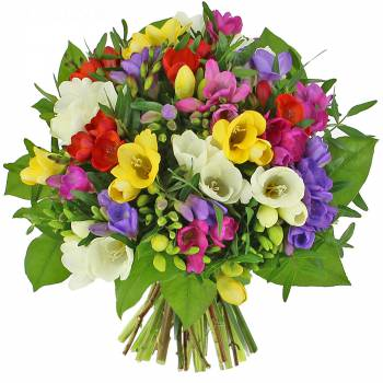 - Le bouquet de Freesias
