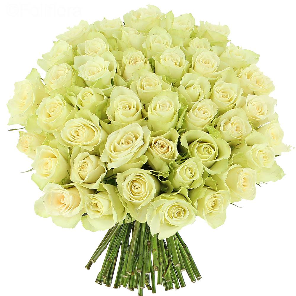 bouquet de roses blanches images
