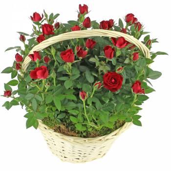 Tous les produits - Brassée romantique de roses