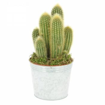 Tous les produits - Cactus