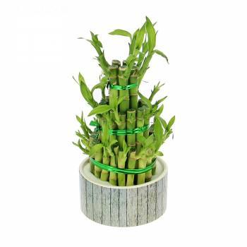 Plantes vertes foliflora - Plante porte bonheur maison ...