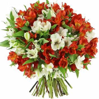 Bouquet de fleurs - Lys du Pérou