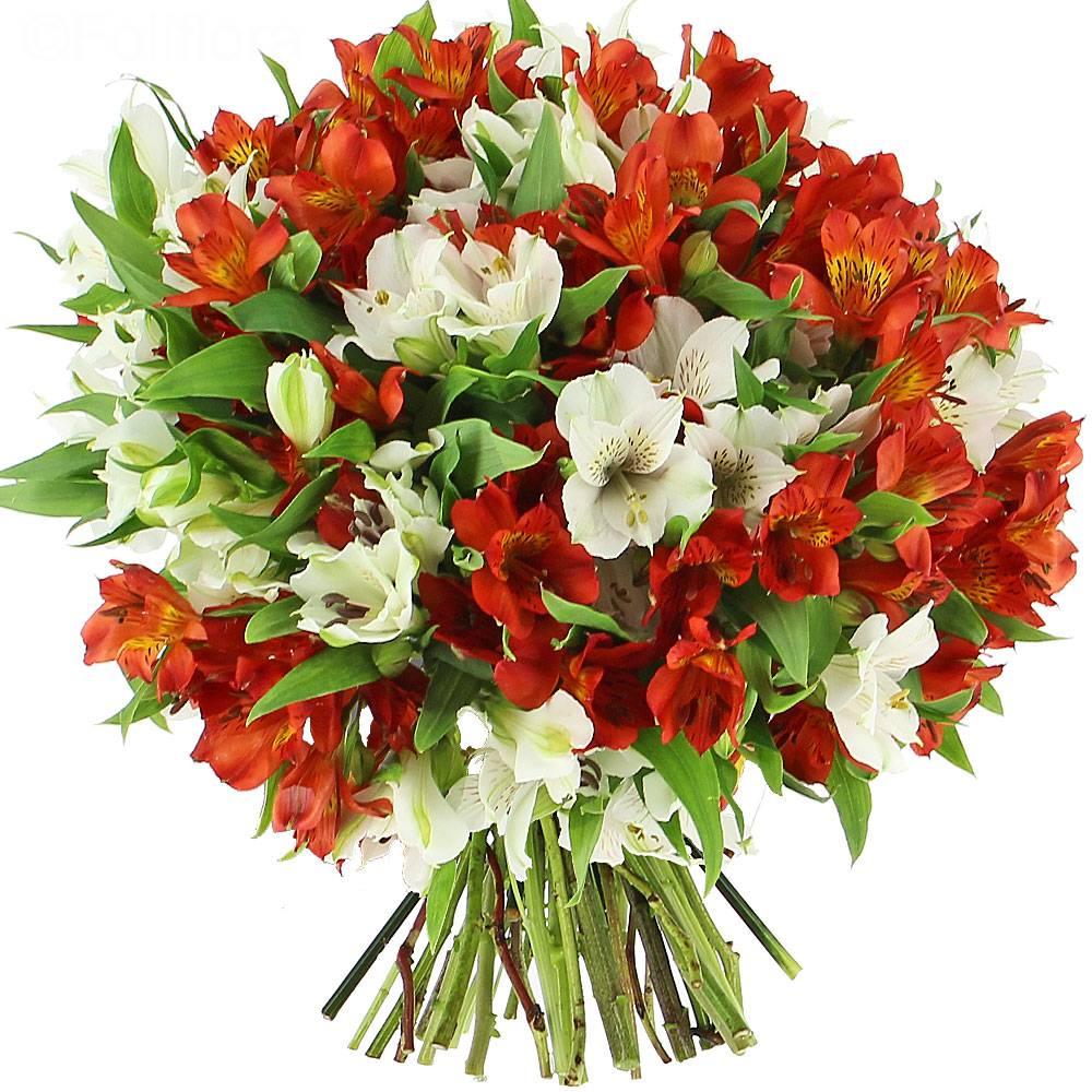 livraison lys du p rou classique bouquet de fleurs foliflora. Black Bedroom Furniture Sets. Home Design Ideas