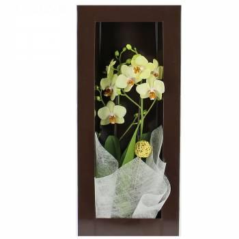 Orchidée - Merveilleuse Orchidée
