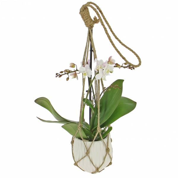 orchidee-suspendue
