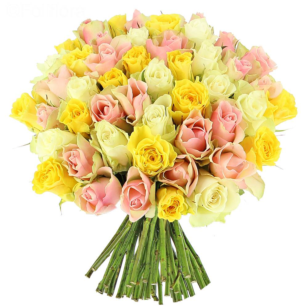 Livraison roses candy 25 roses bouquet de roses for Livraison rose