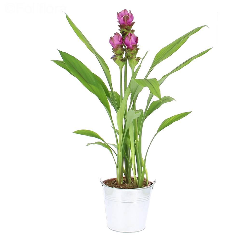 Livraison tulipes tha landaises plante fleurie foliflora for Livraison tulipes