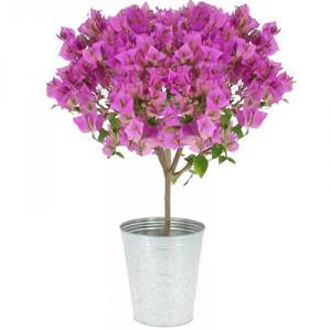 quelles fleurs offrir pour la f te des m res. Black Bedroom Furniture Sets. Home Design Ideas