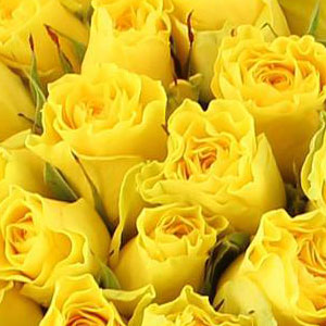 Roses Jaunes Signification