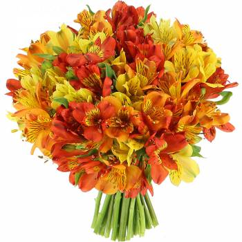 Bouquet de fleurs - Alstroemérias Flamboyantes