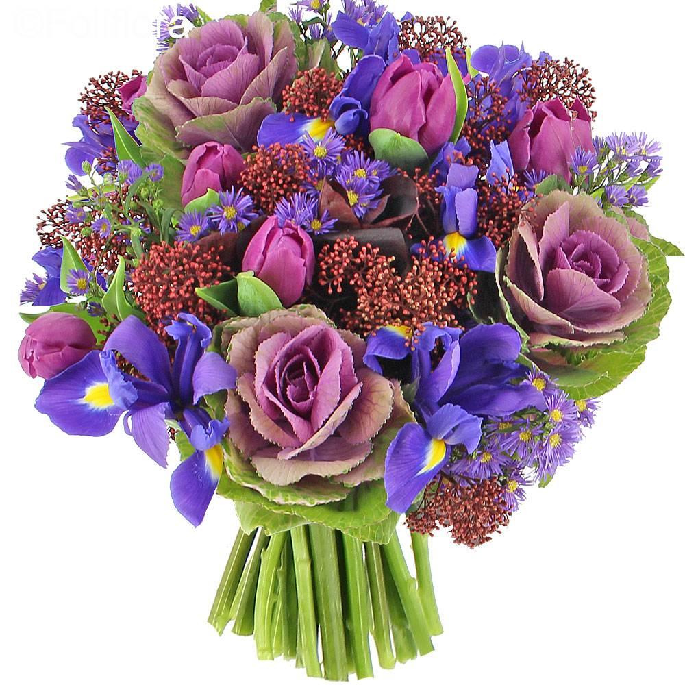 livraison bouquet astro bouquet de fleurs foliflora. Black Bedroom Furniture Sets. Home Design Ideas