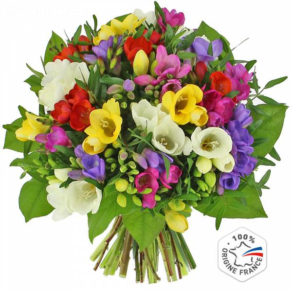 bouquet-de-freesias-fr