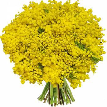 Bouquet de fleurs - Bouquet de Mimosas
