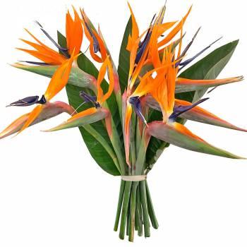 Bouquet de fleurs - Oiseaux de Paradis