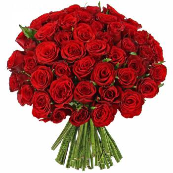Envoi express : Roses rouges Passion - 25 Roses