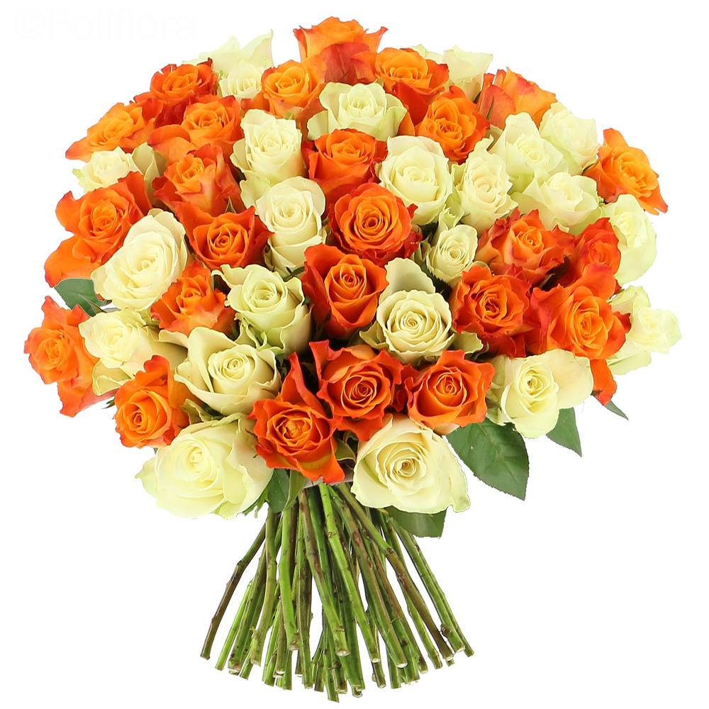 Livraison roses tonic 25 roses bouquet de roses for Bouquet de rose