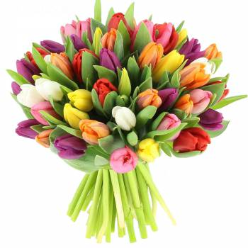Livraison express : Bouquet de Tulipes Multicolores - 25 Tiges