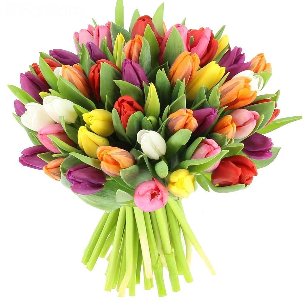 Livraison bouquet de tulipes multicolores bouquet de for Bouquet fleuriste
