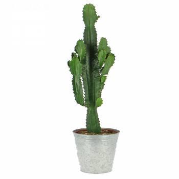 Plante verte - Cactus Mexicain