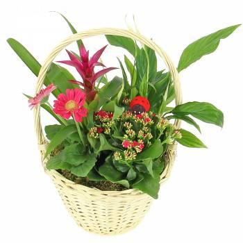 Plante fleurie - Composition Cloé