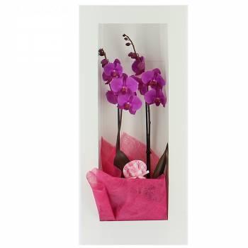 Livraison express : Elégante Orchidée - Cadre Blanc