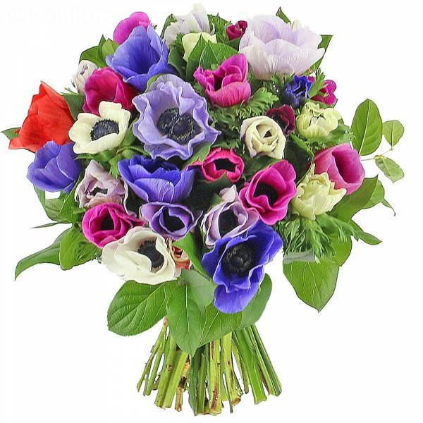 fleurs-anemones