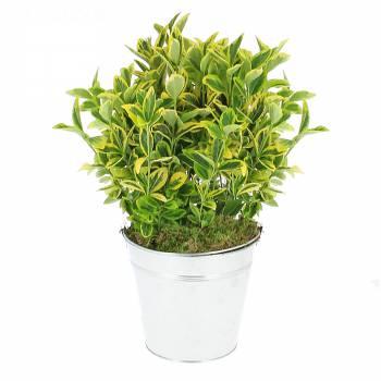 Plante verte - Fusain