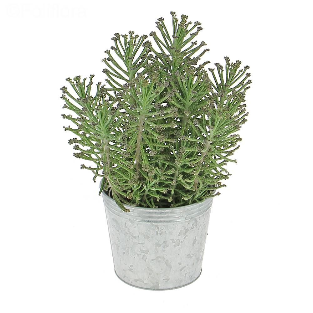 Livraison kalanchoe tubiflora plante verte foliflora for Commande de plantes