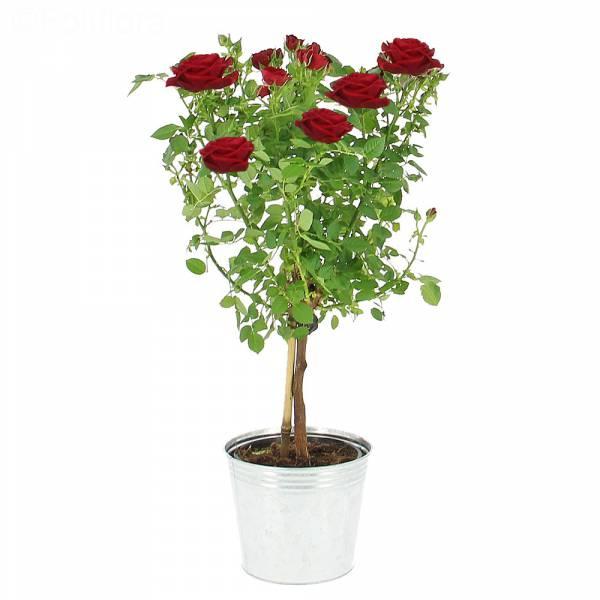 l-arbre-a-roses