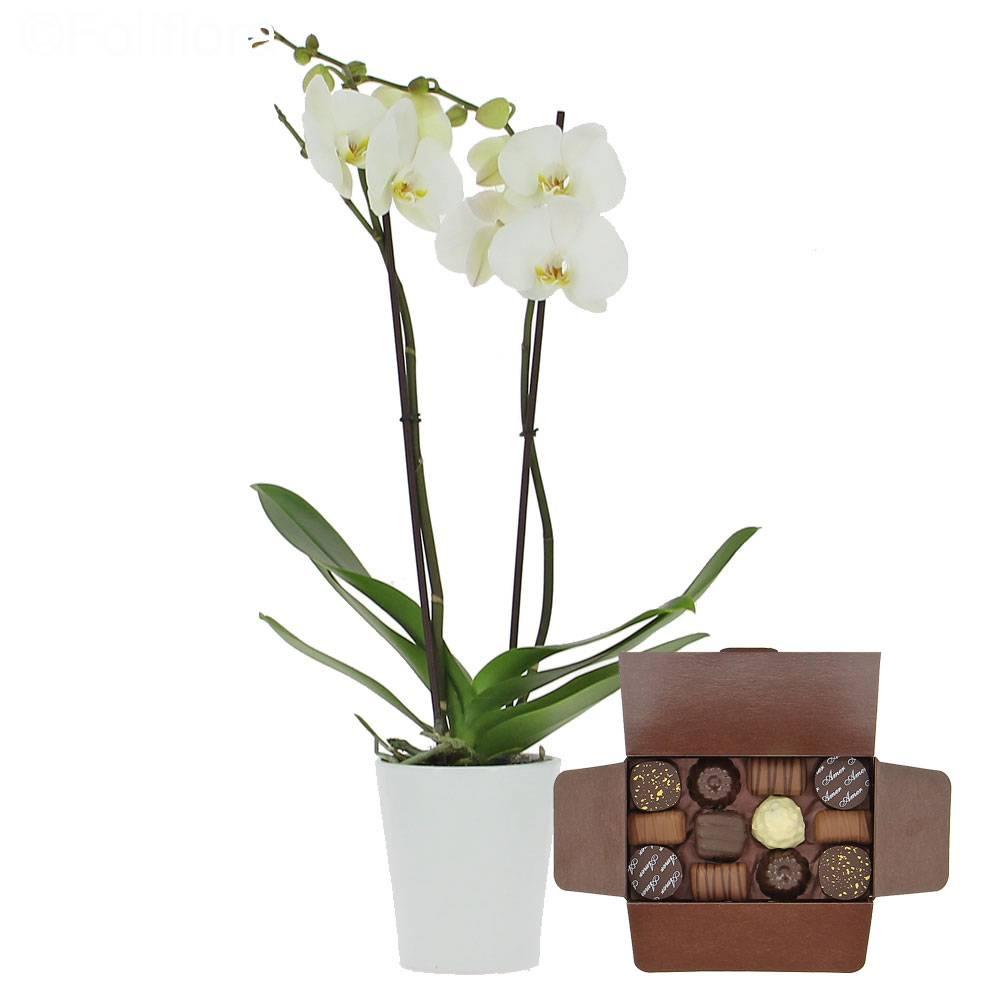 Livraison orchid e de l 39 amour ballotin de chocolats orchid e foliflora - Symbole de l orchidee ...
