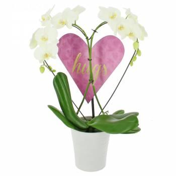 Envoi express : Orchidée des Amoureux