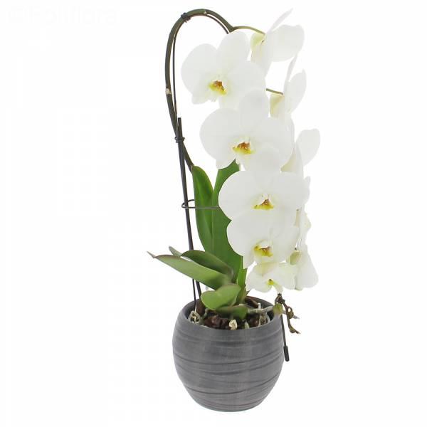 orchidee-cascade
