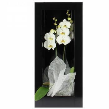Envoi express : Orchidée de Charme - Cadre Noir