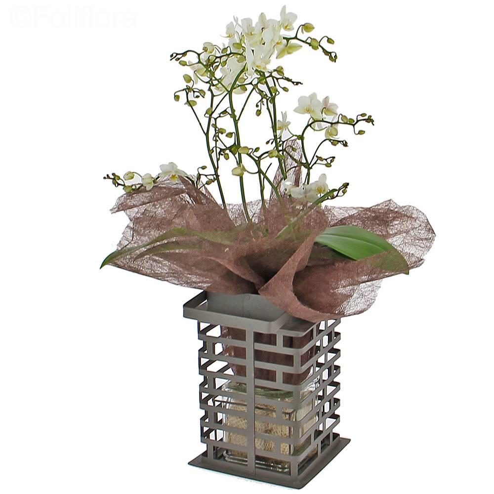 livraison orchid e d co orchid e foliflora. Black Bedroom Furniture Sets. Home Design Ideas
