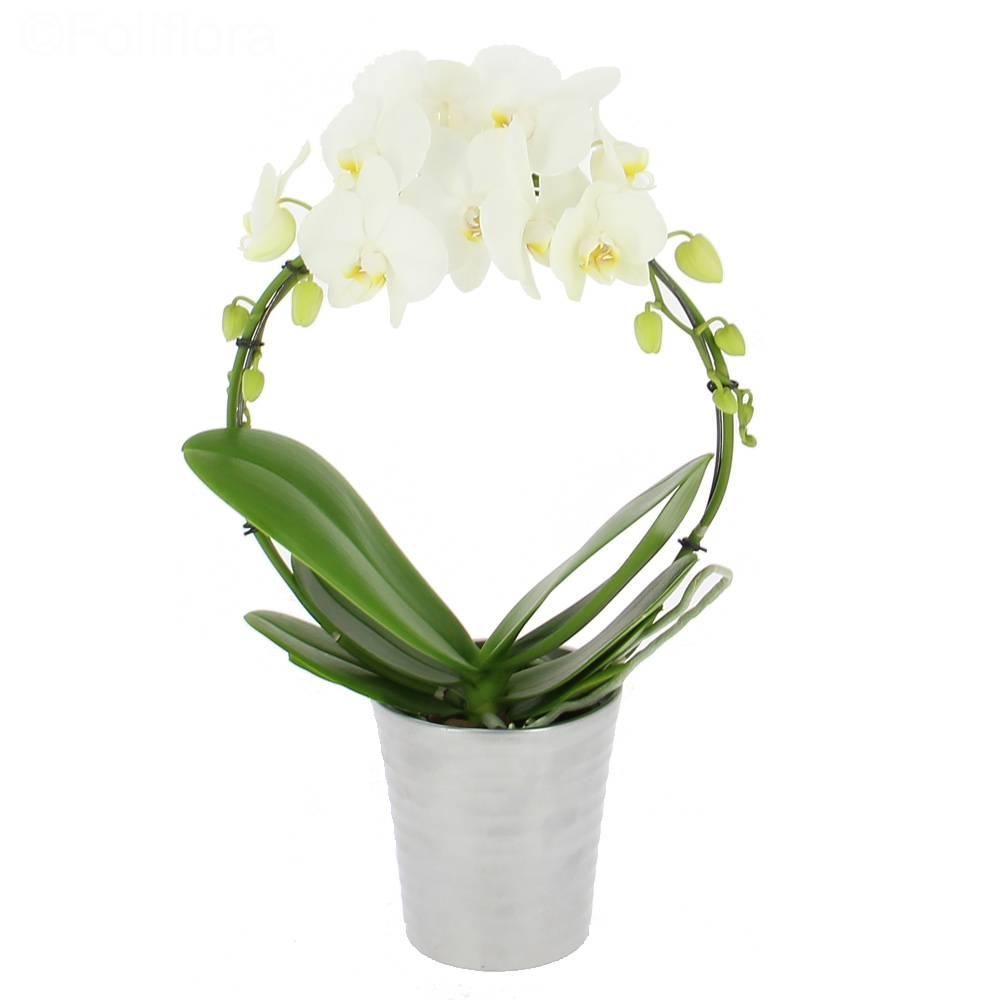 orchidee livraison