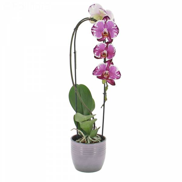 orchidee-sacrifice