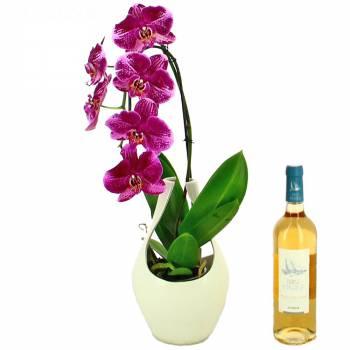 Orchidée - Orchidée et Vin Rosé