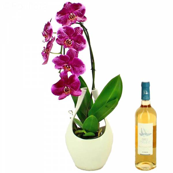orchidee-vin-rose