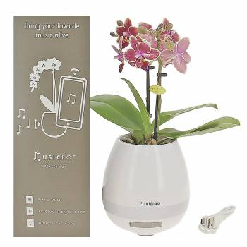 - Orchidée - Enceinte Bluetooth