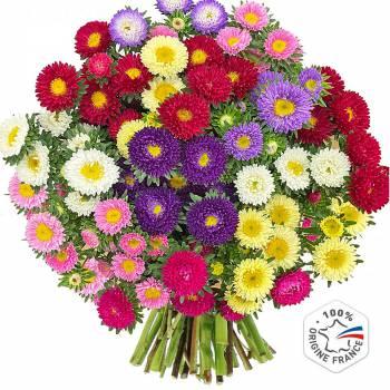 Bouquet de fleurs - Reines Marguerites