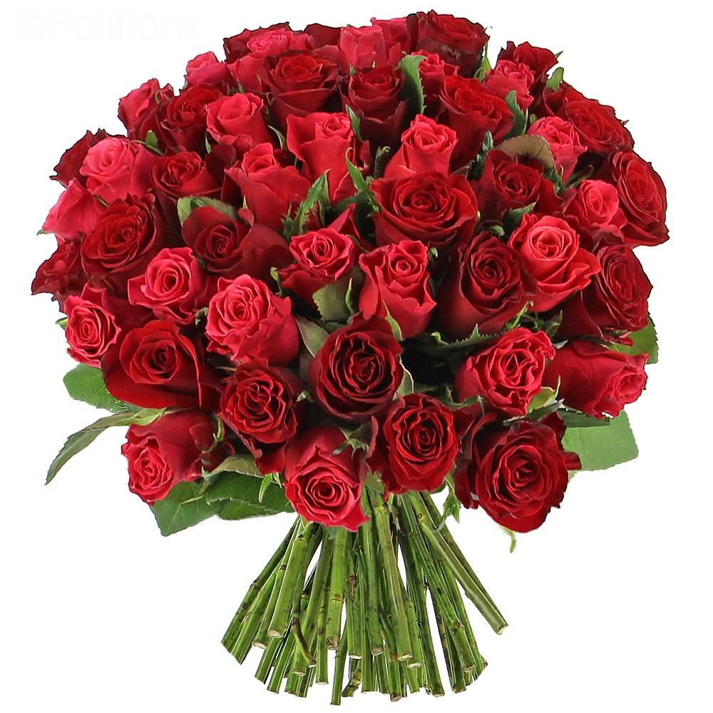 Livraison cama eu de roses 40 roses bouquet de roses for Rose livraison