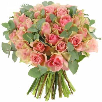 - Roses Désir