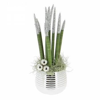 livraison sansevieria cylindrica paillet plante verte foliflora. Black Bedroom Furniture Sets. Home Design Ideas