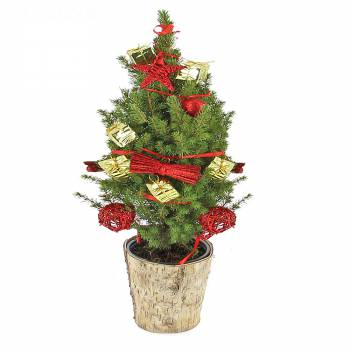 Plante verte - Sapin de Noël décoré