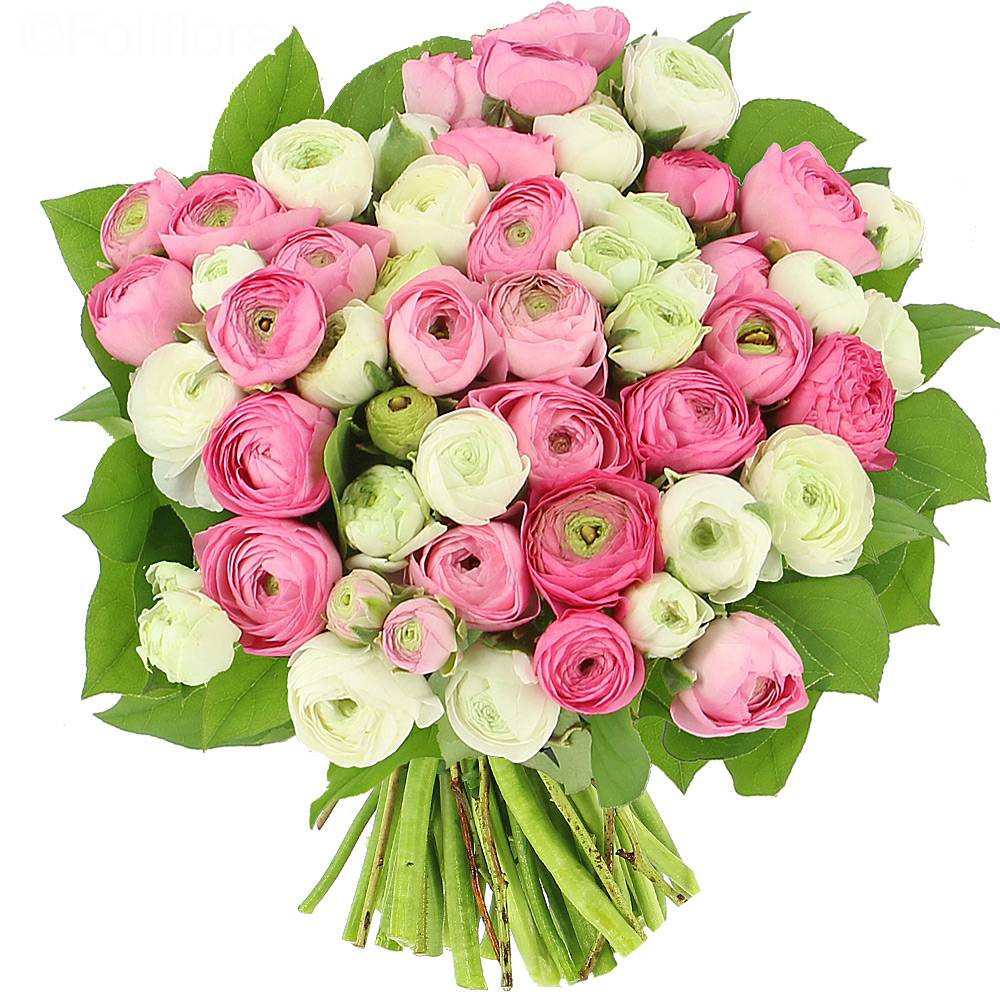 Livraison tendres renoncules bouquet de fleurs foliflora for Livraison plantes paris